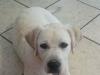 jagger-roxy-puppy